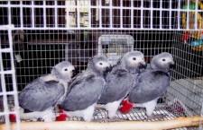 Platíte daně z prodaných papoušků? Měli byste
