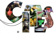 Mezinárodní úmluva CITES letos slaví 40 let existence. Stále ale vzbuzuje rozporuplné reakce a nezřídka je zneužívána pro šikanování chovatelů.