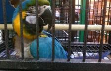 Papouška ze zverimexu, nebo od chovatele?