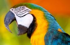 Sousedé řešili spor s chovatelem o hlučné papoušky házením petard k voliérám. Může se to obrátit proti nim