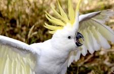 Vadí sousedům křik papoušků ve vaší voliéře? Mohou vám je zakázat