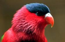 Proč je u některých papoušků nedostatek samců nebo samic? Dá se to nějak regulovat?