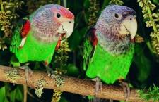 Pomozte nám sestavit aktuální ceník papoušků na českém trhu!