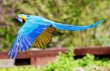 Uletěl vám papoušek? Pomůže vám internetový projekt Uprchlíci