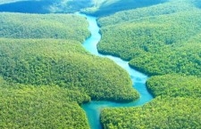 Pytláci ročně vyvezou z Brazílie 38 milionů zvířat za dvě miliardy dolarů