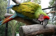 Pokus o statistiku vzácných papoušků v Česku selhal. Kvůli krajským úřadům
