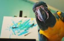 Ara kaninda kreslí obrázky, výtěžek jde na záchranu tohoto druhu v přírodě