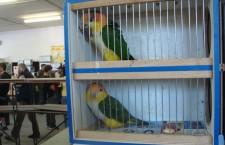 Přehled ptačích burz a výstav pro tento víkend