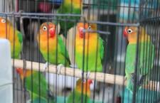 Přehled ptačích burz a výstav pro víkend 21. až 23. září 2012