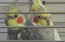 Přehled ptačích burz a výstav pro víkend 26. až 28. října 2012