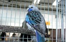 Přehled ptačích burz a výstav pro víkend 2. až 4. listopadu 2012