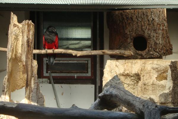 Jeden z hnízdních párů trichů orlích v chovatelském zařízení Čestmíra Drozdka (Foto: Jan Potůček, Ararauna.cz)