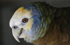 Kolik papoušků z přílohy CITES I mají čeští chovatelé? Podívejte se