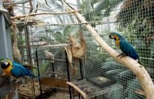 Botanická zahrada v Praze na Albertově má stálou papouščí expozici