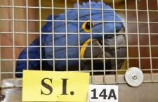 Půjdou osobní averze stranou, nebo Asociace chovatelů ptactva vyšumí do ztracena?