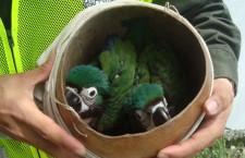 Operace Klec: Interpol zadržel téměř čtyři tisíce pašeráků ptáků v 32 zemích světa
