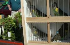 Přehled ptačích burz a výstav pro prodloužený víkend 5. až 8. července 2012