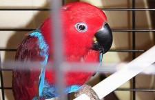 Přehled ptačích burz a výstav pro víkend 14. až 15. července 2012