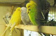 Přehled ptačích burz a výstav pro víkend 21. až 22. července 2012