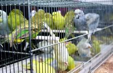 Přehled ptačích burz a výstav pro víkend 24. až 26. srpna 2012