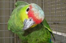 Přehled ptačích burz a výstav pro víkend 11. a 12. srpna 2012