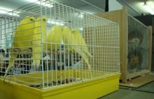 Přehled ptačích burz a výstav pro víkend 31. srpna až 2. září 2012