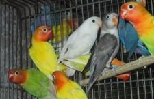 Přehled ptačích burz a výstav pro víkend 7. až 9. září 2012