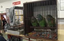 Nová ptačí burza v Sobotce u Jičína si v neděli odbude premiéru. Vznikala dva roky