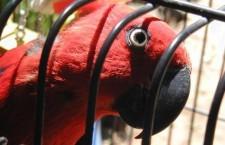 Přehled ptačích burz a výstav pro víkend 14. až 16. září 2012