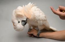 Žena skončila u soudu kvůli nadávkám, kterými papoušek častoval její sousedku