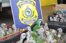 Brazilská policie zadržela pašeráka, co převážel v osobním autě 336 papoušků