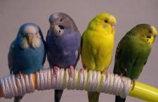 Přehled ptačích burz a výstav pro víkend 12. až 14. října 2012