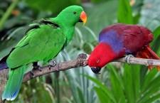 Odchyty a vývozy papoušků z Indonésie i přes zákaz pokračují. S posvěcením úřadů