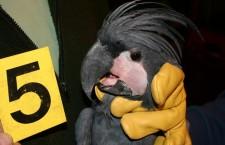 Jak pojistit papoušky proti krádeži nebo úhynu? A kolik to stojí?