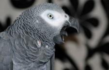 Papoušci nemají rádi elektronickou taneční hudbu, zjistili vědci