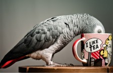 Papoušek není popelnice, nezabíjejte ho zbytky od stolu!