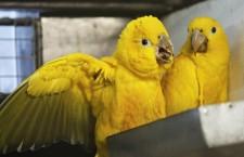 Na návštěvě zimoviště papoušků v ostravské zoologické zahradě