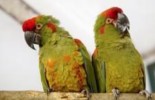 Na návštěvě zimoviště papoušků v ústecké zoologické zahradě