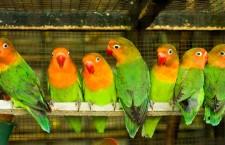 Přehled ptačích burz a výstav pro víkend 7. až 9. prosince 2012