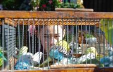 Přehled ptačích burz a výstav pro víkend 27. až 29. srpna 2021