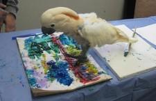 """Útulek nechává přestárlé papoušky """"kreslit"""" a z výtěžku zřídí mobilní geriatrické centrum"""