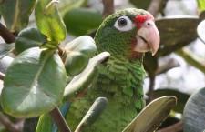 Amazoňan portorický atrakcí amerických dětských parků Animal Kingdom Disney?