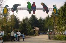 Ptačí park Veldhoven, největší útulek pro papoušky na světě, vyhlásil bankrot