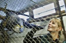 Opět se zavírají zoologické zahrady, letos už potřetí. O kompenzacích stát mlčí
