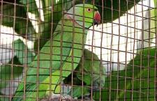 Přehled ptačích burz a výstav pro víkend 25. až 27. ledna 2013
