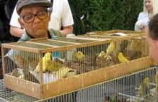 Přehled ptačích burz a výstav pro víkend 14. až 16. května 2021