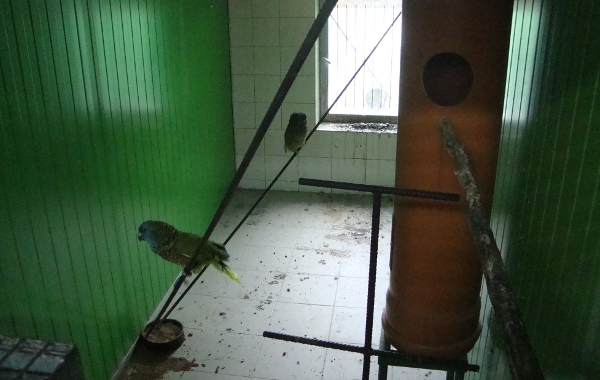 Raritou je také amazoňan mnohobarvý, kterého se Janu Nedělníkovi už podařilo odchovat (Foto: Jan Potůček, Ararauna.cz)