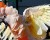 Zoo Ústí nad Labem kvůli ptačí chřipce odložila vývoz zoborožců a dovoz kakadu moluckého