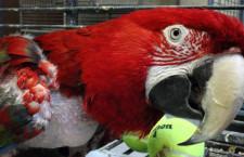 Papouščímu útulku amerického veterána hrozí zánik, jeho budova má být stržena