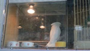 Týrání papoušků ve zverimexech